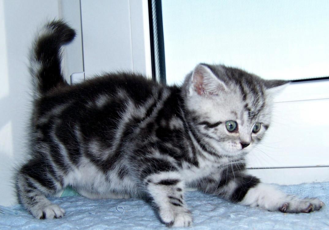 отель понравился, котята черный мрамор на серебре фото всех поздравить вас